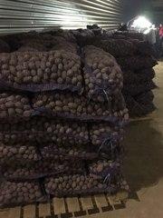 картофель семенной оптом от 20 тонн